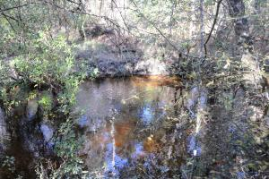 Blackwater River Headwaters Hunting Retreat in Escambia, AL (22 of 28)