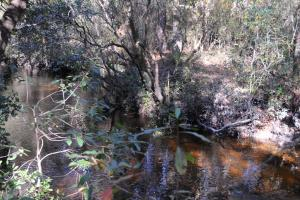 Blackwater River Headwaters Hunting Retreat in Escambia, AL (14 of 28)