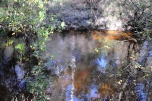 Blackwater River Headwaters Hunting Retreat in Escambia, AL (19 of 28)
