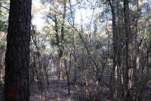 Blackwater River Headwaters Hunting Retreat in Escambia, AL (27 of 28)