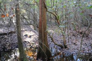 Blackwater River Headwaters Hunting Retreat in Escambia, AL (23 of 28)