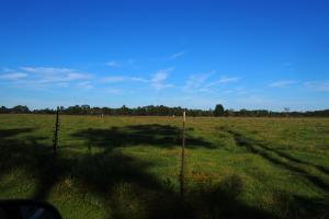 Walnut Hill Cattle Farm and Agricultural  in Escambia, FL (12 of 17)