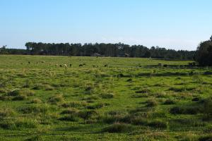 Nokomis Cattle Farm Tract - Escambia County FL