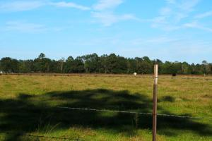 Walnut Hill Cattle Farm and Agricultural  in Escambia, FL (15 of 17)