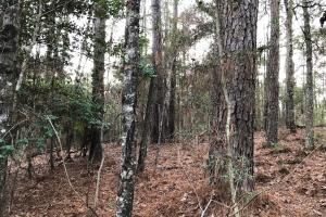Atypical Timber and Hunting Property  - Marion County MS