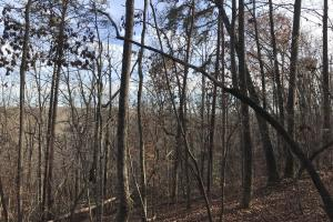 Greenville Mountain Homesite in Greenville, SC (10 of 12)