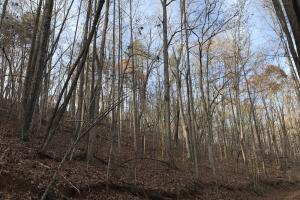 Greenville Mountain Homesite in Greenville, SC (8 of 12)