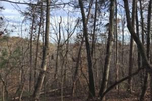 Greenville Mountain Homesite in Greenville, SC (12 of 12)