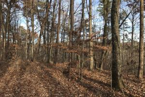 Greenville Mountain Homesite in Greenville, SC (5 of 12)