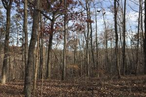 Greenville Mountain Homesite in Greenville, SC (4 of 12)