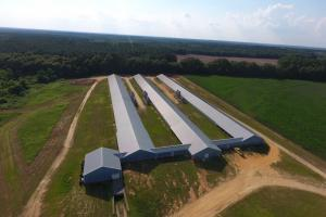 Chicken Breeder Farm - Lexington County SC