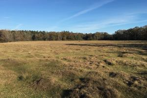 The Frankville Farm & Creek Tract - Washington County AL