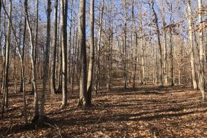 Caswell County Whitetail Tract - Caswell County NC
