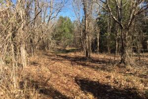 Equality Recreation & Timber Tract - Coosa County AL