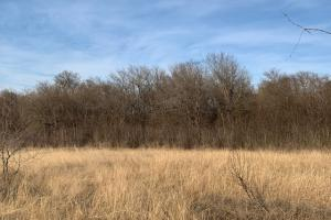 Great mix of timber and open fields on 108 acres in Royse City (19 of 21)
