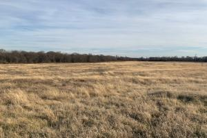 Large open meadow in Royse City (13 of 21)