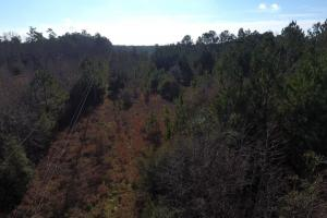 Bonneau National Forest Land in Berkeley, SC (10 of 11)