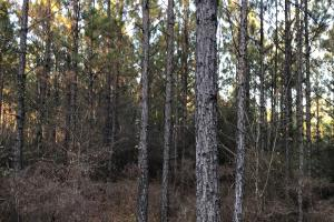 Pinhook Road Timber and Hunting Property - Choctaw County AL