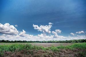 Canton 64 acre Soybean Farm - Madison County MS