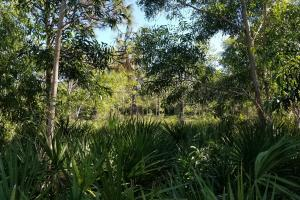 Tropical Pine Island large homesite in Lee, FL (8 of 10)