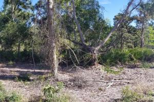 Tropical Pine Island large homesite in Lee, FL (7 of 10)