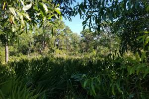 Tropical Pine Island large homesite in Lee, FL (10 of 10)