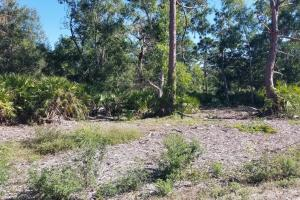 Tropical Pine Island large homesite in Lee, FL (6 of 10)