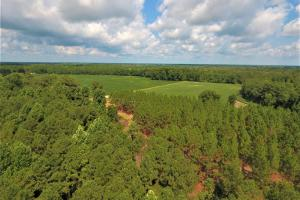 Day Timber Tract in Onslow, NC (4 of 11)