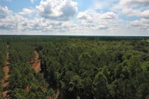 Day Timber Tract in Onslow, NC (7 of 11)
