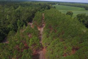 Day Timber Tract in Onslow, NC (6 of 11)