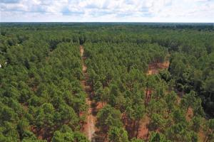 Day Timber Tract - Onslow County NC