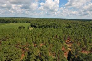 Day Timber Tract in Onslow, NC (3 of 11)