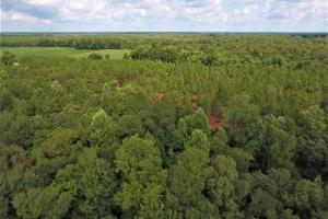 Day Timber Tract in Onslow, NC (9 of 11)