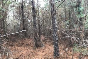 I-22 Hunting & Timber Tract in Marion, AL (4 of 8)