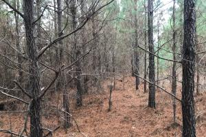 I-22 Hunting & Timber Tract in Marion, AL (2 of 8)