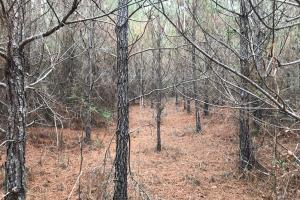 I-22 Hunting & Timber Tract in Marion, AL (6 of 8)