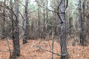 I-22 Hunting & Timber Tract in Marion, AL (5 of 8)