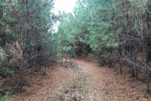 I-22 Hunting & Timber Tract in Marion, AL (3 of 8)