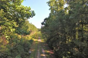 White Oak River Timber Tract - Onslow County NC