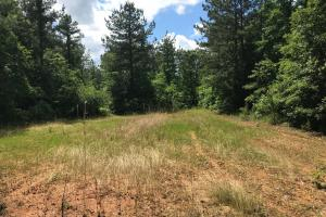 King Fisher Road Hunting and Timber Investment Tract in Hale, AL (29 of 30)