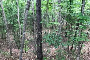 King Fisher Road Hunting and Timber Investment Tract in Hale, AL (3 of 30)