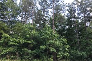 King Fisher Road Hunting and Timber Investment Tract in Hale, AL (25 of 30)