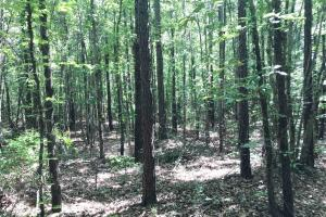 King Fisher Road Hunting and Timber Investment Tract in Hale, AL (9 of 30)