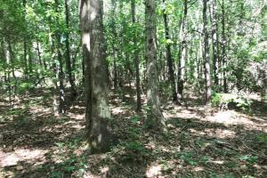 King Fisher Road Hunting and Timber Investment Tract - Hale County AL