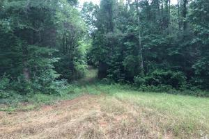 King Fisher Road Hunting and Timber Investment Tract in Hale, AL (6 of 30)