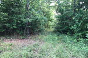 King Fisher Road Hunting and Timber Investment Tract in Hale, AL (21 of 30)