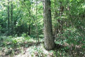 King Fisher Road Hunting and Timber Investment Tract in Hale, AL (14 of 30)