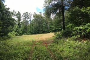 King Fisher Road Hunting and Timber Investment Tract in Hale, AL (18 of 30)