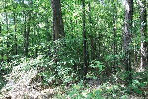 King Fisher Road Hunting and Timber Investment Tract in Hale, AL (19 of 30)