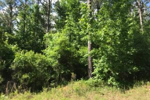 King Fisher Road Hunting and Timber Investment Tract in Hale, AL (24 of 30)